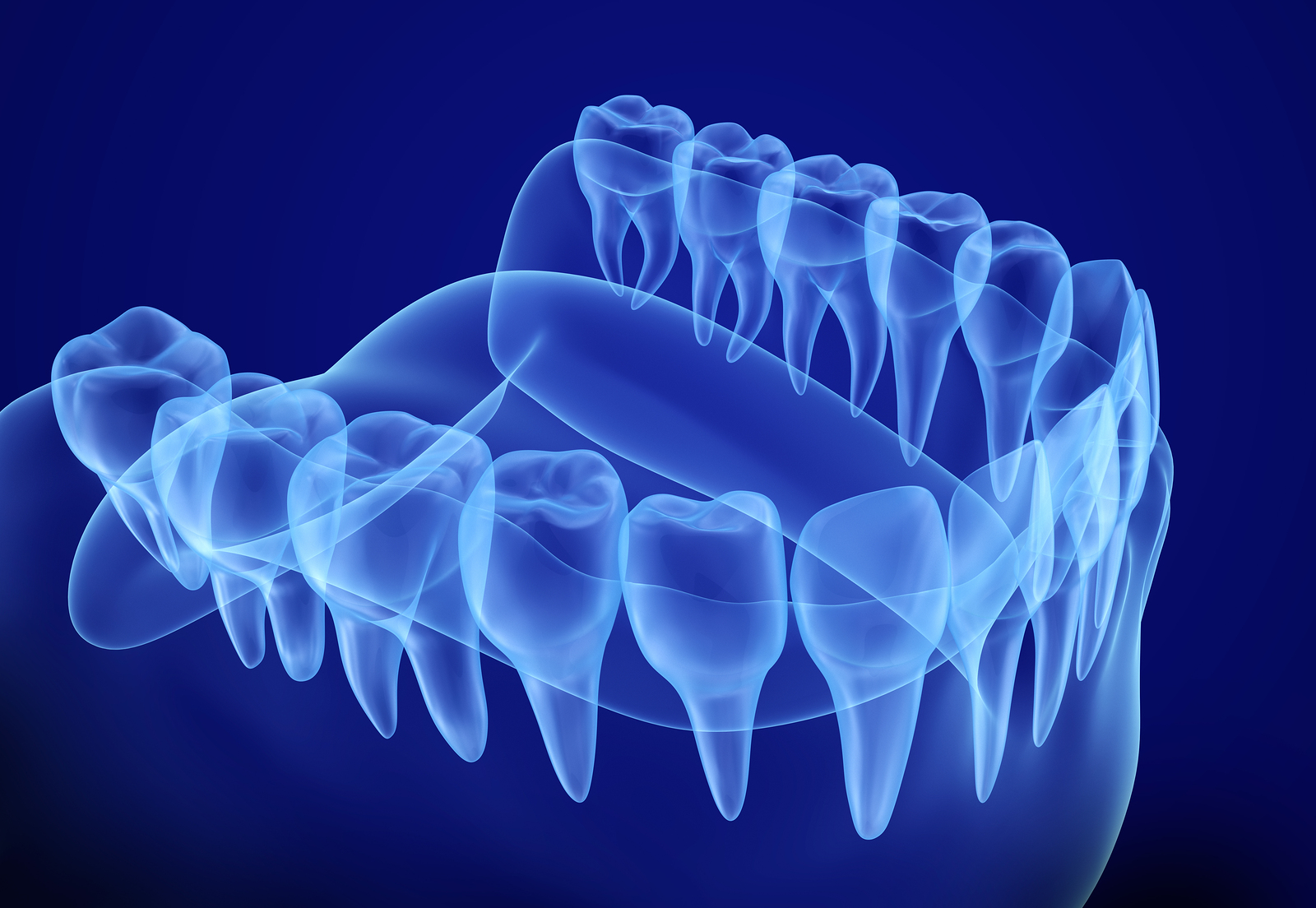 Mouth gum and teeth xray view. Medically accurate tooth 3D illustration